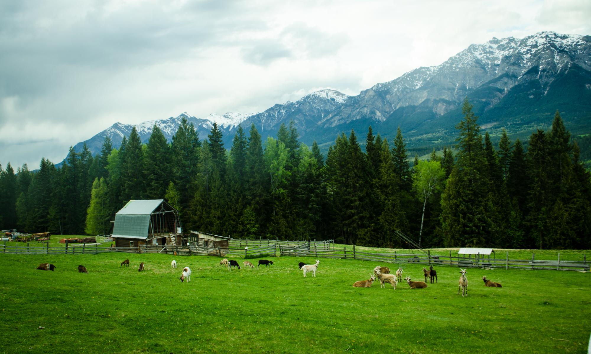Organic Sports Ranch